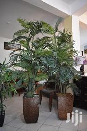 2 Palm Trees | Home Accessories for sale in Nakuru, Mai Mahiu