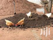 Pure Chicken Manure (No Sawdust)   Meals & Drinks for sale in Kajiado, Kitengela