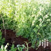 Garden Peas   Meals & Drinks for sale in Kajiado, Kimana