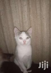 2 Pretty Kittens 2 Months Old   Cats & Kittens for sale in Nairobi, Kasarani